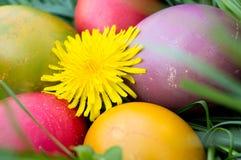 Fiorisca le uova colorate Pasqua a forma di nel gra verde fotografia stock