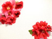 fiorisca, rosso, la natura, rosa, isolato, i fiori, la pianta, bianco, è aumentato, si inverdiscono, bellezza, il fiore, floreale Fotografia Stock Libera da Diritti