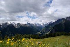 Fiorisce i prati nelle alte montagne Fotografia Stock Libera da Diritti