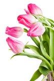 Fiorisce i tulipani Fotografie Stock