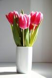Fiorisce i tulipani Fotografie Stock Libere da Diritti