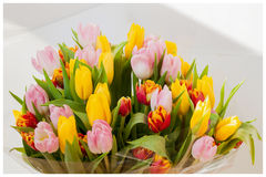 Fiorisce i tulipani Mazzo Mazzi colorati dei tulipani Cartolina d'auguri per tutte le occasioni, particolarmente molla Per romant Immagine Stock