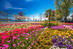 Fiorisce i tulipani, palme nel centro del parco della città di Costanza con il lago Bodensee Constance nei precedenti Immagini Stock