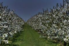 fiorisce il bianco fotografia stock libera da diritti