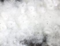 Fiore del cotone. Immagine Stock