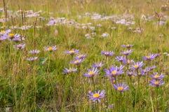 Fiorisce il campo di erba Fotografie Stock