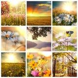 Fiorisce il collage Fotografia Stock Libera da Diritti
