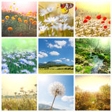 Fiorisce il collage Fotografia Stock