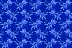 Fiorisce il fondo blu del modello di bucaneve Fotografia Stock