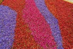 Fiorisce il fondo dei petali Fotografia Stock