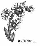 Fiorisce il grafico del modello di autunno in bianco e nero Fotografie Stock