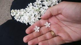 Fiorisce il lillà bianco sulla mano, cinque petali la testa Immagine Stock