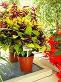 Fiorisce il primo piano ai giardini botanici nazionali Immagine Stock Libera da Diritti