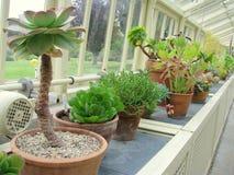 Fiorisce il primo piano ai giardini botanici nazionali Immagini Stock Libere da Diritti