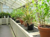 Fiorisce il primo piano ai giardini botanici nazionali Fotografia Stock
