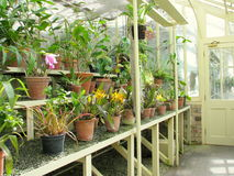 Fiorisce il primo piano ai giardini botanici nazionali di Dublino Immagini Stock Libere da Diritti