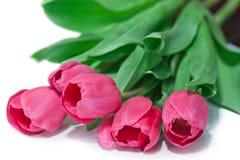 Fiorisce il primo piano del tulipano immagini stock libere da diritti