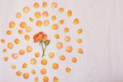 Fiorisce il simbolo del cuore della composizione fatto dei fiori secchi Cuore di Rose Petals immagini stock libere da diritti