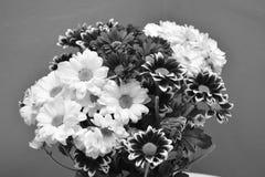 Fiorisce kwiaty monocromatico monocromatico del czarne del biale di stokrotki Fotografia Stock