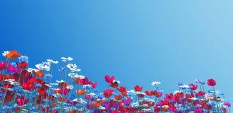fiorisce l'estate Immagini Stock