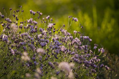 fiorisce l'estate Fotografia Stock