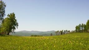 fiorisce l'estate del prato Fotografia Stock Libera da Diritti