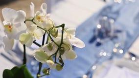 Fiorisce l'orchidea bianca, i fiori fioriscono e fioriscono archivi video