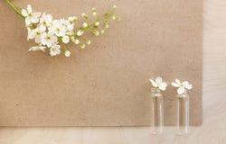 Fiorisce la ciliegia con il foglio bianco di vecchia carta Fotografia Stock Libera da Diritti