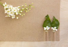 Fiorisce la ciliegia con il foglio bianco di vecchia carta Immagini Stock Libere da Diritti