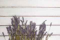 Fiorisce la composizione La pagina ha fatto dei fiori freschi della lavanda su fondo bianco Lavanda, fondo floreale Disposizione  immagini stock libere da diritti