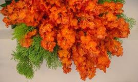 Fiorisce la fioritura arancio dell'orchidea bella Immagini Stock Libere da Diritti