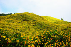 Fiorisce la montagna Fotografie Stock