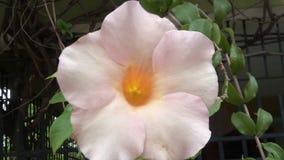 Fiorisce la natura dei petali dei fiori della natura Fotografia Stock