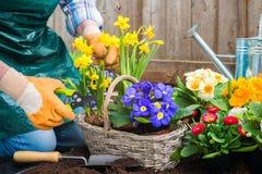 fiorisce la piantatura del giardiniere fotografia stock libera da diritti