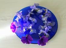 Fiorisce la riflessione blu dell'ombra del piatto delle iridi dei germogli di fiori recisi Fotografia Stock