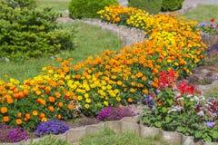 fiorisce le piante ornamentali Fotografia Stock Libera da Diritti