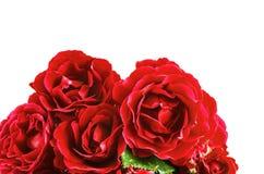 Fiorisce le rose rosse su un fondo bianco Immagine Stock