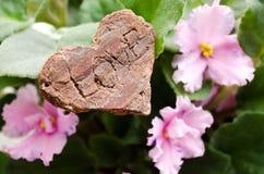 Fiorisce le viole Cuore con le parole ?amore ? Fiore domestico Fiori rosa con i punti porpora immagine stock