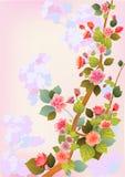 Fiorisce sakura. Fotografie Stock Libere da Diritti