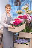Fiorista dai vasi da fiori Fotografia Stock