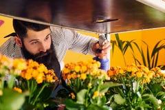 Fiorista maschio professionista con la barba e tatuaggio sulla sua uniforme d'uso della mano che prende cura dei fiori nel negozi Fotografia Stock Libera da Diritti