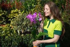 Fiorista o giardiniere che odora al fiore Immagini Stock Libere da Diritti