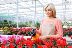 Fiorista piacevole che lavora con i fiori Fotografie Stock