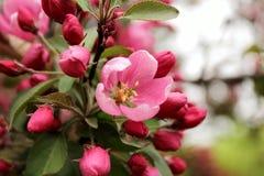 fioritura fotografia stock