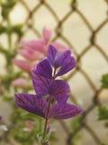 fioritura Immagini Stock