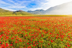 Free Fioritura At Piano Grande With Castelluccio, Umbria, Italy Stock Photography - 57994242