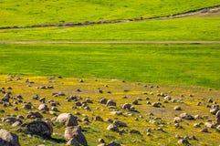 Fioritura campo di erba gialla e verde di bello paesaggio marocchino di estate Fotografia Stock Libera da Diritti