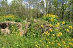 Fioritura coleseed e balle di fieno nel parco in primavera Fotografie Stock Libere da Diritti