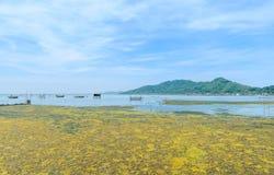 Fioritura d'alghe in un oceano tropicale, Tailandia Immagini Stock Libere da Diritti