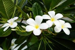 Fioritura dei fiori Fotografia Stock